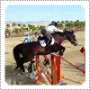 Exclusive: Mack Riding and Competing with Odysseus in the Thermal HITS Show-Jumping Competition on Saturday the 2nd of March 2013.